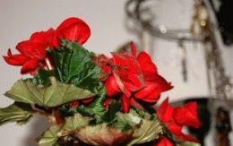 Календарь цветовода на февраль: работы в цветнике