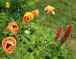 Календарь цветовода на июнь: работы в цветнике