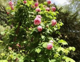 Календарь цветовода на июль: работы в цветнике