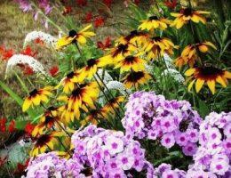 Календарь цветовода на август: работы в цветнике