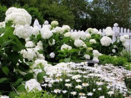 Белый сад ландшафтный дизайн фото