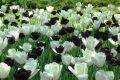 Черно-белый сад фото
