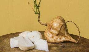 Миниатюра к статье Джикама (ямсовая фасоль) – выращивание из семян, уход, рецепты