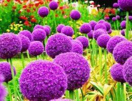 Названия фиолетовых цветов и растений для ландшафтного дизайна