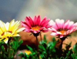 цветы газания фото
