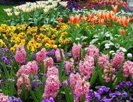 kakie cveti sajat osenu
