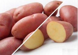 kartofel skarlett otzivi