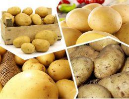 kartofel udacha