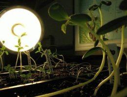 Лампы для растений: как выбрать и купить фитолампу для рассады