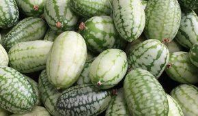 Миниатюра к статье Мелотрия — что за растение, выращивание из семян в открытом грунте