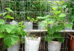 как посадить огурцы в мешках