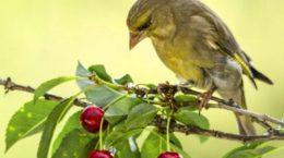 otpugnut ptic