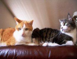 Провоз животных в электричке: правила оплаты за собак и кошек