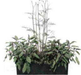 Композиции с ароматическими травами, фото