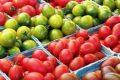 Районированные сорта томатов для открытого грунта