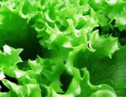 Листовой салат фото