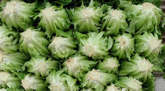 salat latuk