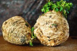 Корневой сельдерей: выращивание и уход в открытом грунте