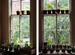 Сажаем семена для выращивания на подоконнике – основные правила
