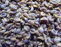 семена петрушки фото