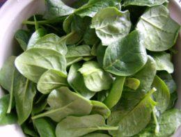 Шпинат – польза, выращивание на даче