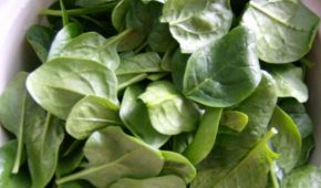 Миниатюра к статье Шпинат – польза, выращивание на даче