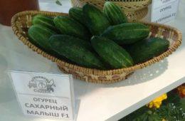 Сорта огурцов по назначению, подбор и секреты выращивания