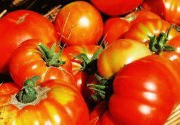 Сорта помидоров по назначению – удобный каталог