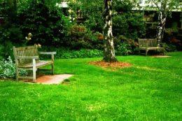 Виды газонов: обычный газон фото