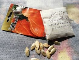 Особенности обмена семенами и заказа семян по почте
